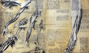 A da Vinci study of muscle structure, now held in Milan's Science and Technology Museum.
