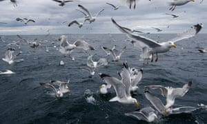 Flock of seagulls.