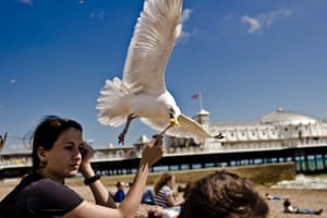 'Gulls are not the slightest bit aggressive, unless it's about competition for food.'