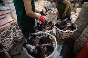 Preparing fish for sale at Taipei market