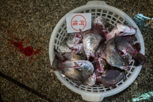 Fish for sale at Taipei market