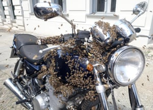 Berlin Kreuzberg, A swarm of bees cluster on a motorcycle.